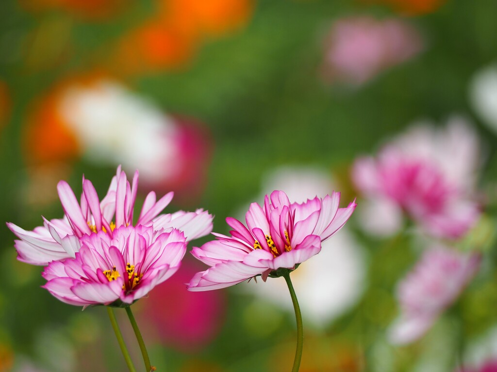 横浜で出会った癒しの花たち