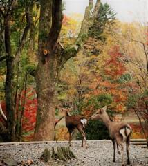 晩秋の奈良を往く[キュートなハート]