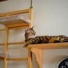 猫はマッタリGW