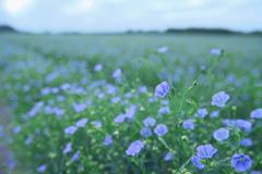 薄紫の平原…