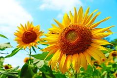 太陽の恵みを沢山浴びて…