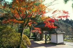 紅葉の寺門