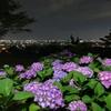 金沢の夜景と紫陽花