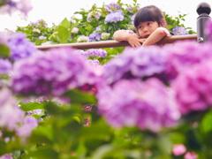 娘と紫陽花