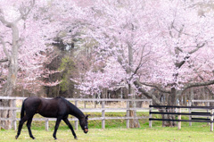 優駿桜ロード