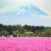 富士芝桜②