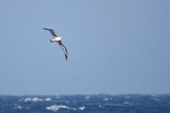 海原を飛ぶ