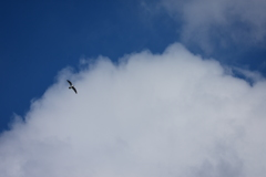 カモメの居る空