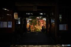 熊野神社の紅葉
