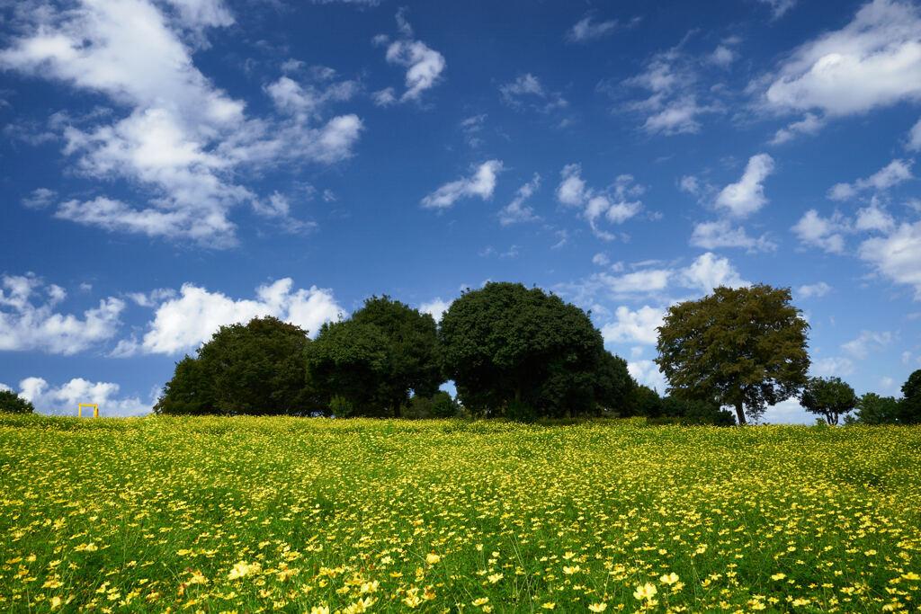 レモンブライトの咲く丘