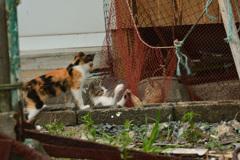 猫パンチと傍観者