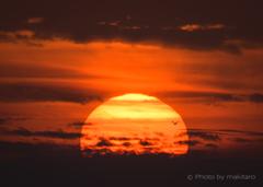 瀬戸の夕陽 「一羽の鳥」