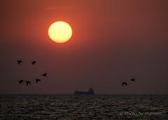 瀬戸の夕陽「帰巣」