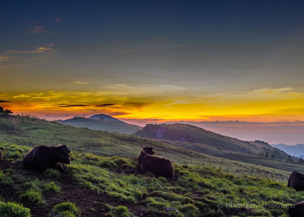 牧場の夜明け まきたろう
