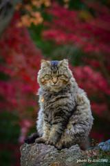 ボス猫の風格