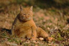 ネコのオッサン