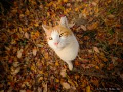 秋を連れて