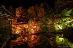 寳登山神社 紅葉ライトアップ