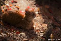 秋の香 2