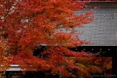 秋色に染まる興禅院