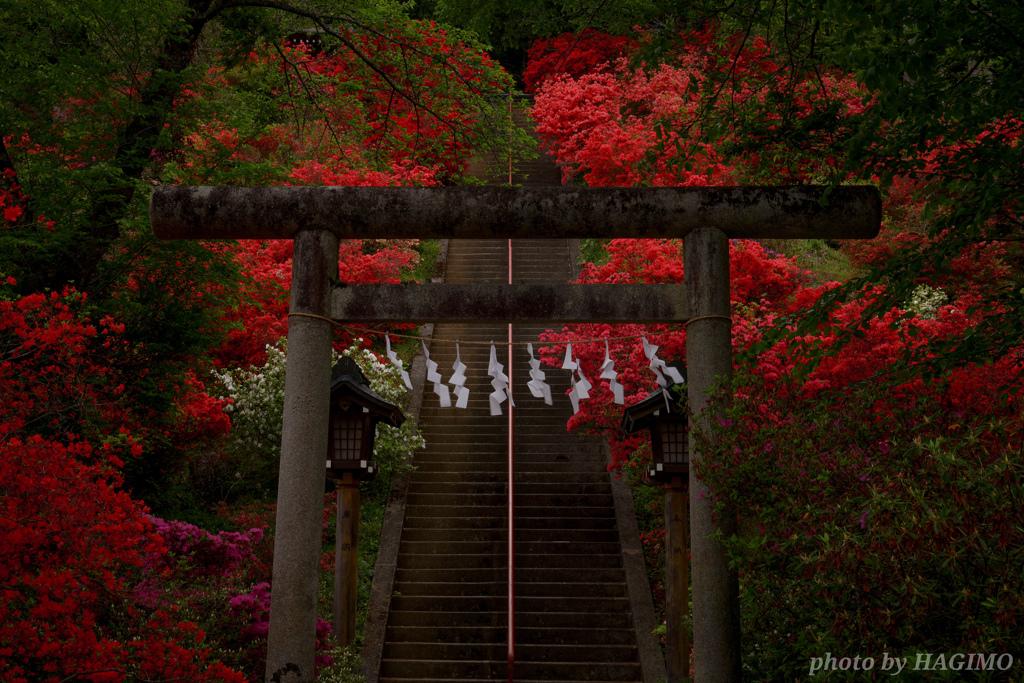 愛宕神社を彩る