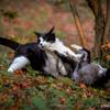 猫パンチを食らいつつカメラ目線な猫