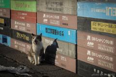 港に住む猫