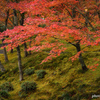 赤に染まる庭園
