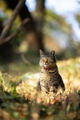 小春猫日和