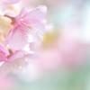 春風やさしく