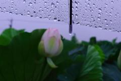 雨でもヘッチャラ!