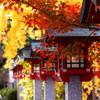去年の秋、敦賀で