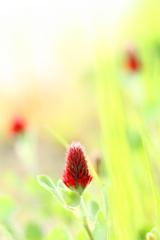 春  輝く