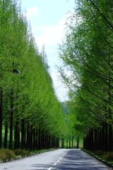 静かな並木道