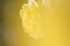 世界が黄色く染まる瞬間