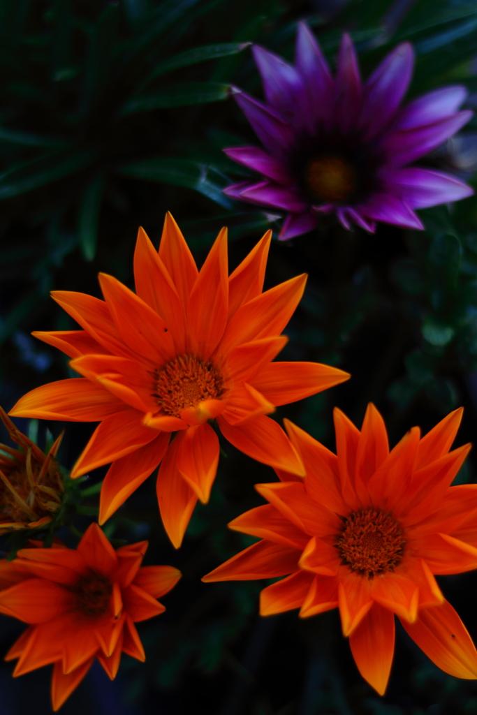 出迎える花たち