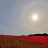 天空を彩るポピー(3)