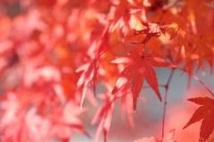 町中の紅葉