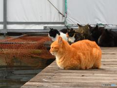 猫団子、はぐれ猫