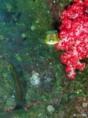 柏島の魚達#4ギョギョギョ
