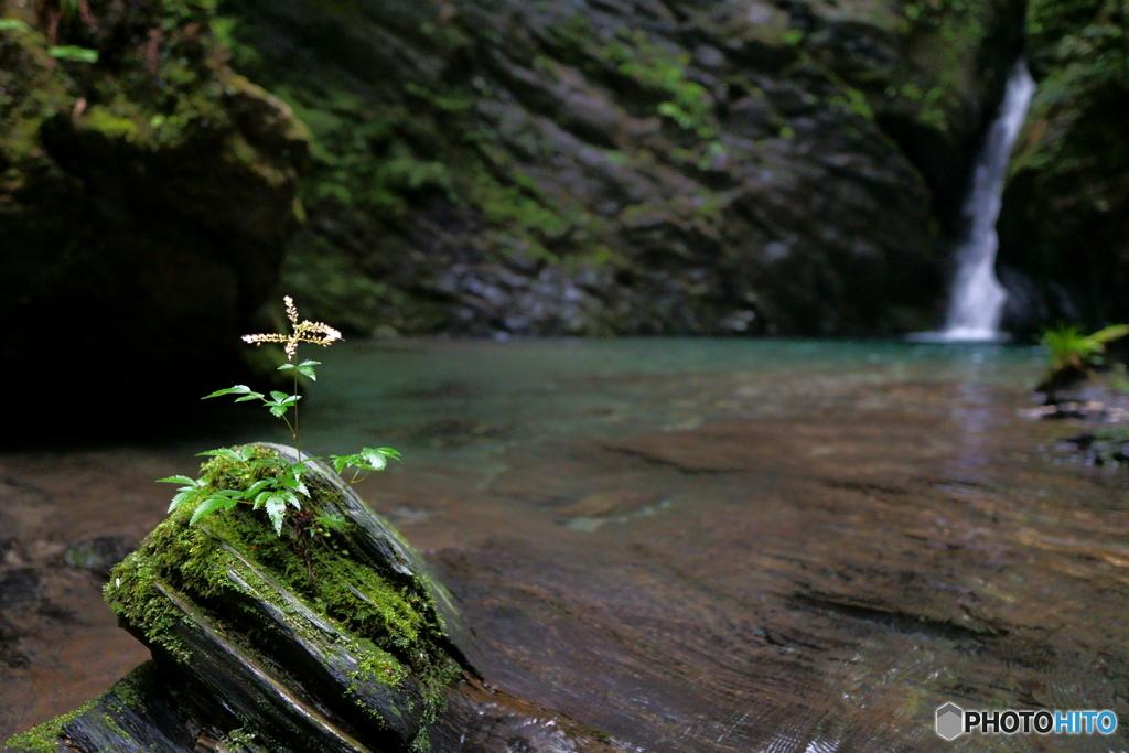 滝壺のお花