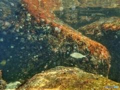 柏島の魚達#6マリンスノーの中で