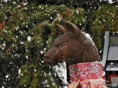 稲荷散歩~雪やコンコン