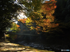 いい天気~清滝にて