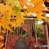 竹鳥居の道