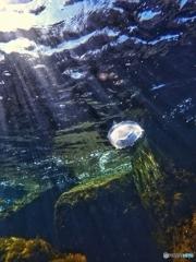 水海月の旅