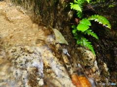 鶏鳴の滝 小さな