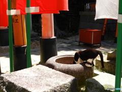 自由ニャンコ手水鉢で喉を潤す@伏見稲荷