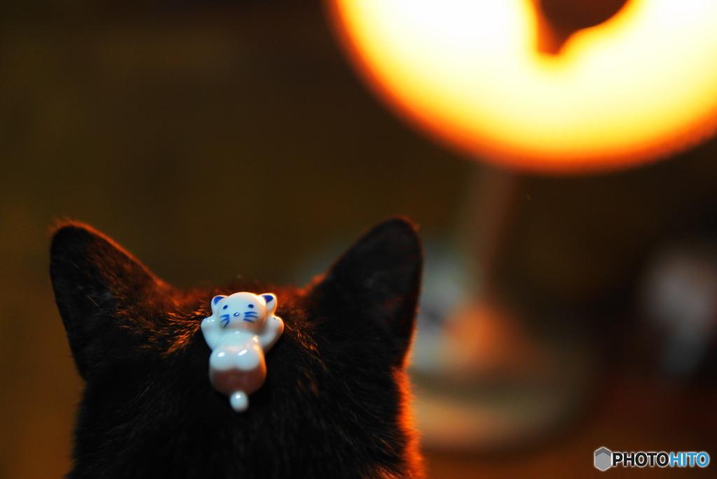 猫の箸置きを置かれる猫