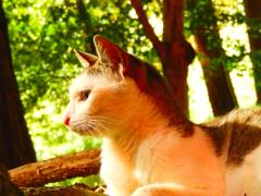 猫の稲荷、後譚